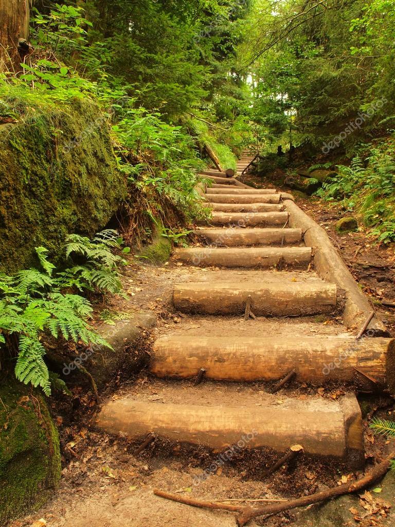 Vecchie scale in legno in giardino sentiero turistico di bosco inselvatichito passi da tronchi - Scale in giardino ...