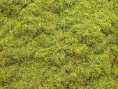 Decay harvested grass in big green smell mound in corner of garden. — Stock Photo