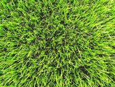 View into plastic grass, artificial green turf texture background — Stock Photo