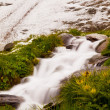 Quick stream is falling down over slipper stones and betwen fresh green herbs. First snow on Alpine hill in background. Contrast of summer flower with wet autumn snow. — Stock Photo #52805149