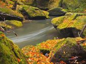 Autumn colors at mountain river banks. Fresh green mossy boulders on river banks covered with vivid colors. — Stock Photo
