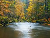 Autumn mountain river banks. Gravel and fresh green mossy boulders  on river banks covered with colorful leaves from beeches, maples and birches. — Stock Photo