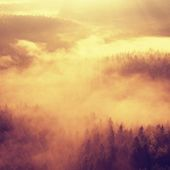 Beautiful misty daybreak in magical land. Rocky gulch full of golden fog and hot Sun is shinning above horizon. Deep forest under cover. — Stock Photo