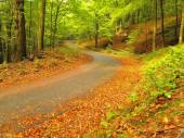 Curved path bellow beech trees at near autumn forest surrounded by fog. Rainy day. — Stock Photo