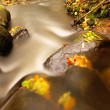 Mountain river with low level of water, gravel with first colorful leaves. Mossy rocks and boulders on river bank, green fern, fresh green leaves on trees. — Stock Photo #56269505