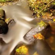 Mountain river with low level of water, gravel with first colorful leaves. Mossy rocks and boulders on river bank, green fern, fresh green leaves on trees. — Stock Photo #56269519