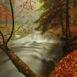 Autumn river in forest. Bended tree above water level, river bank covered with colorful leaves from maples, beeches or aspens tree. — Stock Photo #56579539