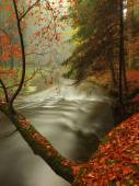 Autumn river in forest. Bended tree above water level, river bank covered with colorful leaves from maples, beeches or aspens tree. — Stock Photo