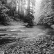 Forest on bank of autumn mountain river covered by beech leaves. Bended  branches above water. Black and white photo. — Stock Photo #56656501