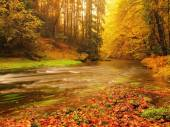 Dreamy sunset above mountain in autumn forest. Colorful mist between trees on river banks. — Stock Photo