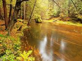 Stony bank of autumn mountain river covered by orange beech leaves. Fresh green leaves on branches above water make colorful reflection in level  — Stock Photo
