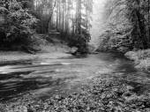 Forest on bank of autumn mountain river covered by beech leaves. Bended  branches above water. Black and white photo. — Stock Photo