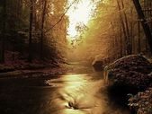 Sunset above mountain river covered by orange beech leaves. Fresh leaves on branches above water make reflection — Fotografia Stock