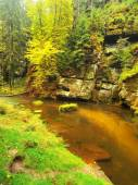 Stony bank of autumn mountain river covered by orange beech leaves. Fresh green leaves on branches above water make colorful reflection in level  — Foto de Stock