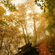 Autumn mist in leave forest. Bended beech and maples trees with less leaves under fog. Rainy day. — Stock Photo #56689781