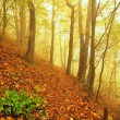 Autumn mist in leave forest. Bended beech and maples trees with less leaves under fog. Rainy day. — Stock Photo #56689799