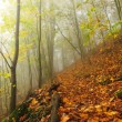 Autumn mist in leave forest. Bended beech and maples trees with less leaves under fog. Rainy day. — Stock Photo #56689823