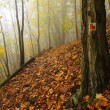 Autumn mist in leave forest. Bended beech and maples trees with less leaves under fog. Rainy day. — Stock Photo #56689825