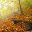 The autumn misty and sunny daybreak at beech forest, old abandoned bench below trees. Fog between beech branches without leaves. — Photo #56689847