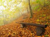 The autumn misty and sunny daybreak at beech forest, old abandoned bench below trees. Fog between beech branches without leaves. — Stock Photo