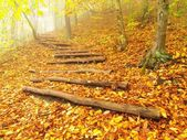 Wooden trunk steps in autumn forest, tourist footpath. — Stock Photo