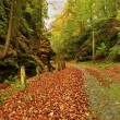 Old cobble stone way lined by stony milestones in deep gulch in autumn forest. Old orange leaves cover ground — Stock Photo #58307303