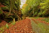 Old cobble stone way lined by stony milestones in deep gulch in autumn forest. Old orange leaves cover ground — Stock Photo