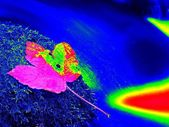 Infrared photo of fallen maple leaf. Autumn castaway on wet slipper stone in cold blurred water of mountain river. — Stock Photo