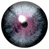 Animal eye with purple colored iris, detail view into eye bulb. Alien strange eye — Stockfoto