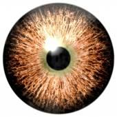 Animal eye with purple colored iris, detail view into eye bulb. Alien strange eye — Stock Photo