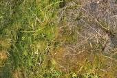 Old decay harvested grass in big green smell mound in corner of garden. Organic fertilizer. — Stock Photo