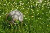 Old football ball hidden in the high grass flower and weed filed — Stock Photo