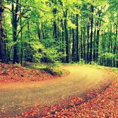 Curved path bellow beech trees. Spring afternoon in forest after rainy day.  Wet asphalt with smashing orange leaves. — Stock Photo