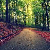 パス怒鳴るブナを湾曲しました。雨の日の後の森で春の午後。オレンジを破りで濡れたアスファルトを葉します。. — ストック写真