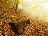 秋天的薄雾和阳光明媚破晓在山毛榉森林,被遗弃的长凳下面的树。没有叶子的山毛榉分支之间的雾. — 图库照片