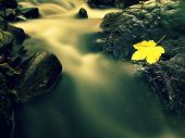 Autumn colorful leaf. Castaway on wet slipper stone in stream — Photo