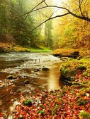 Mountain river with low level of water, gravel with colorful beech, aspen and maple leaves. Fresh green mossy stones and boulders on river bank. Rainy day. — Stock Photo