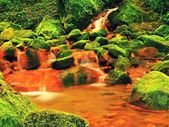 Cascades in rapids of mineral water. Red ferric sediments on big mossy boulders between ferns. — Stock Photo