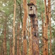 Wooden birdhouse feeder for birds hanging on a tree  — Stock Photo #53227839