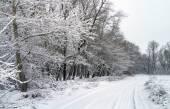 Winter weg in besneeuwde bos. witte winterlandschap met bomen c — Stockfoto