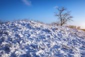 Winter nature with tree and snow-covered plants on the hill — Stockfoto
