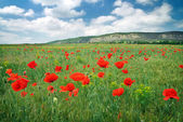 Beautiful Landscape. Field with red poppies. — Stock Photo