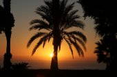Palm trees silhouettes at sunset in Spain, Tenerife — Stock Photo