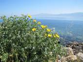 Island landscape with flowers, Greece — 图库照片