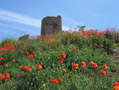 Genoese fortress Cembalo, Popies on a hill, Balaklava, Crimea — Stock Photo