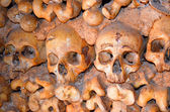 頭蓋骨と骨 — ストック写真