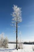 Picturesque nature in the north of Russia in the winter — Stock Photo