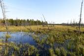 Scenic autumn landscape swamps in northern Russia — Stock Photo