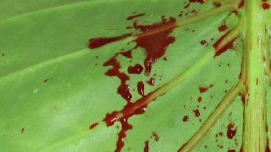 Blood on Green Leaf — Stockvideo