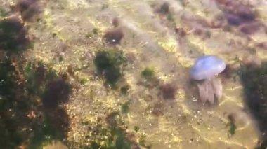 Jellyfish in Underwater — Stock Video